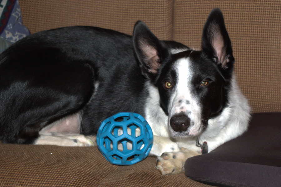 Colin with blue ball
